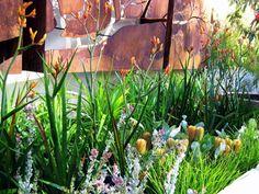 Australian native garden. Kangaroo paws and native grasses. Bush Garden, Australian Garden Design, Australian Native Garden, Australian Plants, Garden Paths, Garden Beds, Garden Hose, Outdoor Plants, Outdoor Gardens