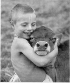 c421fabfed 24 Best Cows images