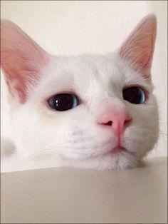 自分が眠っている間の表情を自分でコントロールすることができる人は、おそらくいないんじゃないかと思いますが、こちらの白ネコもそこら辺、思いっきり失敗しています。ちょっとショックなくらい失敗しているの...
