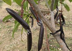 Plumeria Care, Cuttings, Garden Tools, Wall, Design, Plant Cuttings, Yard Tools, Walls