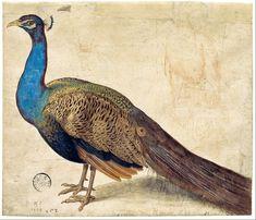 heaveninawildflower:  Peacock (dated 1559) by Nicolaus Juvenel (before 1540 - 1597). Museum KunstpalastvwHGYlfoq2IbWw at Google Cultural Institutevia Wikimedia