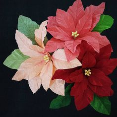 Christmas in July again with poinsettia samples for Autumn classes at the Castle. (Helps with keeping one's mind off the fact that it's a bit warm out?) This holiday plant with the showy bracts is named for the first US ambassador to Mexico, a Mr. Poinsett. #euphorbiapulcherrima #cuetlaxochitl #poinsettias #crepepaper #castleintheair