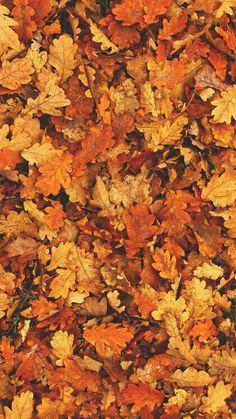 Картинка с тегом «autumn, leaves, and fall»