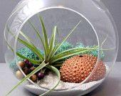 Airplant terrarium from seaandasters on Etsy