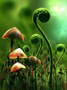 fern. & mushrooms ..? but mostly fern