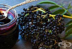 Как без захар да си направим чудотворен сироп от бъз? - изображение
