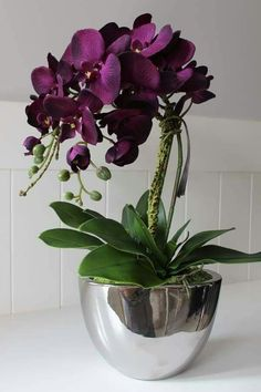 Purple Orchids as Flowering Houseplants Learn about some low maintenance indoor plants Indoor Flowering Plants, Indoor Flowers, Exotic Flowers, Tropical Flowers, Beautiful Flowers, Orchid Flower Arrangements, Orchid Plants, Arreglos Ikebana, Low Maintenance Indoor Plants
