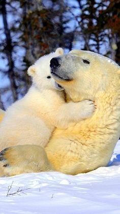 polar bear, couple, young, arms, snow