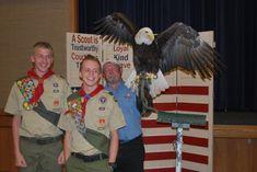 Bald Eagle at Eagle Scout Court