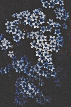blue petals// via hellanne.tumblr.com