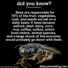 Knew this and why they're my favorite insect since I need them for my garden other then the fact I adore honey. And also since they never bothered me much nor stung me before.