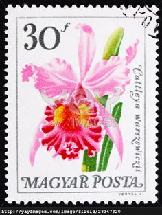 HUNGARY - CIRCA 1965: a stamp printed in the Hungary shows Flower, Cattleya Warszewiczii, Orchid, circa 1965