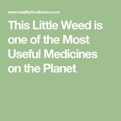 This Little Weed is one of the Most Useful Medicines on the Planet