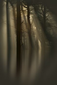 Crepuscular rays, or God rays, filter down through the trees of a flooded wood; their warmth cutting through the light mist that spread through the trees during the previous night. Wow Photo, Beautiful Places, Beautiful Pictures, Tree Forest, Foggy Forest, All Nature, Belle Photo, Enchanted, Mists