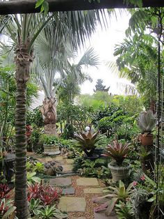 Tropical garden. I. Will use some urns to raise some plants to give height and structure as my backyard is dead flat