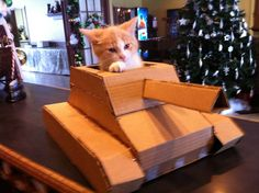 Diy Cardboard Cat House Beautiful How to Build A Tank with A Cardboard Box. Cardboard Cat House, Diy Cardboard, Cardboard Fireplace, Cardboard Playhouse, Cardboard Furniture, Little Kittens, Kittens Cutest, Funny Cat Pictures, Animal Pictures