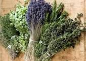 Herb de Provence Olive Oil Herb Seeds, Fennel Seeds, 4 Oz Mason Jars, Southern Greens, Culinary Lavender, 257, Organic Herbs, Aromatic Herbs, Natural Herbs