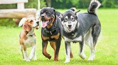 3 Easy to Teach Dog Tricks Teach Dog Tricks, Dog Breeds List, Power Animal, Popular Dog Breeds, Dog Selfie, Types Of Dogs, Dog Hacks, Mixed Breed, Dog Photos