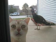 catasters:  Angry Birds: Not As Much Fun In Real Life… Photo via Imgur