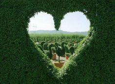 Alice in Wonderland / karen cox.  The Queen of Heart's gardens.