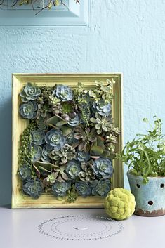 Here, succulents crowd into a shallow shadow box for an ultra-slim, portable vertical garden. Choose plants that have the same requirements for sun and water, and vary the color and texture of the leaves for the most eye-catching display.