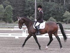 Capriol | Dressage Horses For Sale | DressageMarket.com