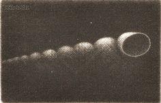 Yozo Hamaguchi - Spiral Shell - Mezzotint