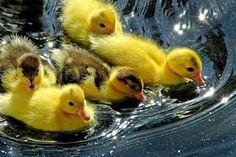 ANIMAUX:oiseaux-birds