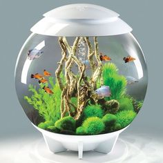 With its hidden waterline, the biOrb HALO is a visually seamless aquarium. The biOrb HALO 60 is the perfect aquarium for anyone new to fish keeping. You can enjoy all the technology of an advancedbiOrb Halo / 16 Gallon All-in-One Acrylic Aquarium Kit Mini Aquarium, Aquarium Kit, Aquarium Design, Planted Aquarium, Seahorse Aquarium, Goldfish Aquarium, Fish Aquariums, Mini Terrarium, Terrarium Scene