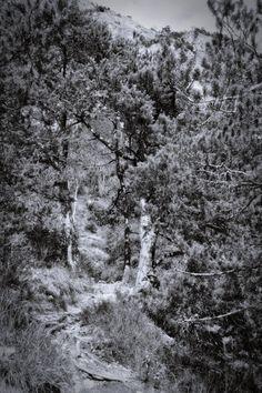 bwstock.photography  //  #mountain #walkway Black White Photos, Black And White, Walkway, City Photo, Mountain, Nature, Photography, Outdoor, Black White