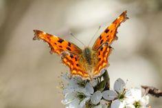 Brueton Park Butterfly