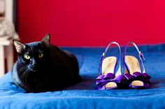 Lisa's purple wedding shoes (and slinky black cat)