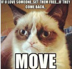 Grumpy Cat - Love Someone