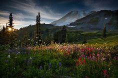 woodendreams:  Mt. Rainier, Washington, US (by Larry Marshall Photography)