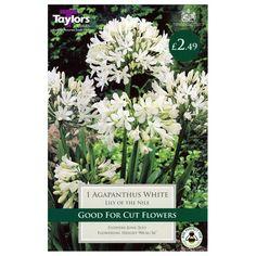 Taylors Bulbs Agapanthus White (Single Pack) (TS803) Cut Flowers, White Flowers, Bee Friendly, Agapanthus, White Lilies, Planting Bulbs, Taylors, House Plants, Packing