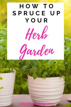Is it time to give your herb garden some love? Want to add some additional herbs? Click now how you can spruce up your herb garden starting today. Enjoy fresh herbs in your home. Gardening For Beginners, Gardening Tips, Starting A Garden, Flower Pots, Flowers, Fresh Herbs, Herb Garden, Container Gardening, How To Find Out
