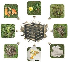 Terrarium, Herbs, Clever, Gardens, Vegetables, Home Decor, Terrariums, Outdoor Gardens, Herb