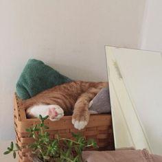 - ̗̀pinterest:sleepyplant ̖́-