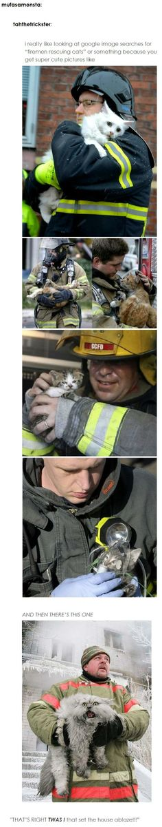 Firemen rescuing cats... that last post just killed me! XD