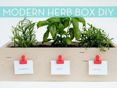 how to make a modern kitchen herb box (credit: Laura Parke)