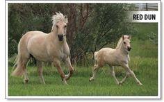 Canadian Fjord Horse Association