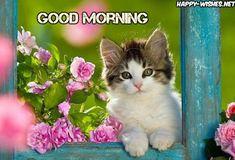 Trendy cats and kittens wallpaper gatos Kittens And Puppies, Cute Cats And Kittens, I Love Cats, Crazy Cats, Kittens Cutest, Pretty Cats, Beautiful Cats, Animals Beautiful, Pretty Kitty