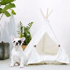 little dove Pet Teepee Dog(Puppy) & Cat Bed - Portable Pet Tents & Houses for Dog(Puppy) & Cat Beige Color 24 Inch no Cushion Dog Tent, Teepee Dog Bed, Dog House Bed, Indoor Pets, Buy A Dog, Dog Houses, Small Dogs, Your Pet, Pet Supplies