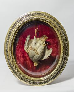 Taxidermy English Partridge from Ayre & Co.