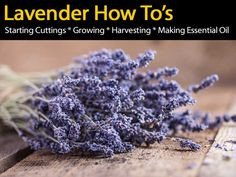lavender-how-to-083114