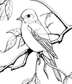 Blue Bird Coloring Pages For Kids