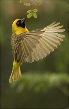 weaver by Dave Gardner on 500px