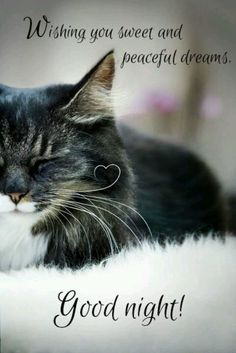 Good night beautiful, sweetest dreams!!!!! I hope you sleep well. I did go by tonight, actually on my way home now 10:44. :) And so you know.... I LOVE YOU!!!!!!!!!!!!