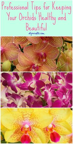 Professional Tips for Keeping Your Orchids Healthy and Beautiful {Video} –...