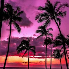 A #pink sky to cure your #winter blues. Come stay #warm with us. #themarker #themakerresort #paradise #luxury #sunset #hotellife #tropical #oasis #loveFL #kpalmtree